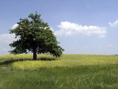 Erneuerbare Energien - aktiver Umweltschutz